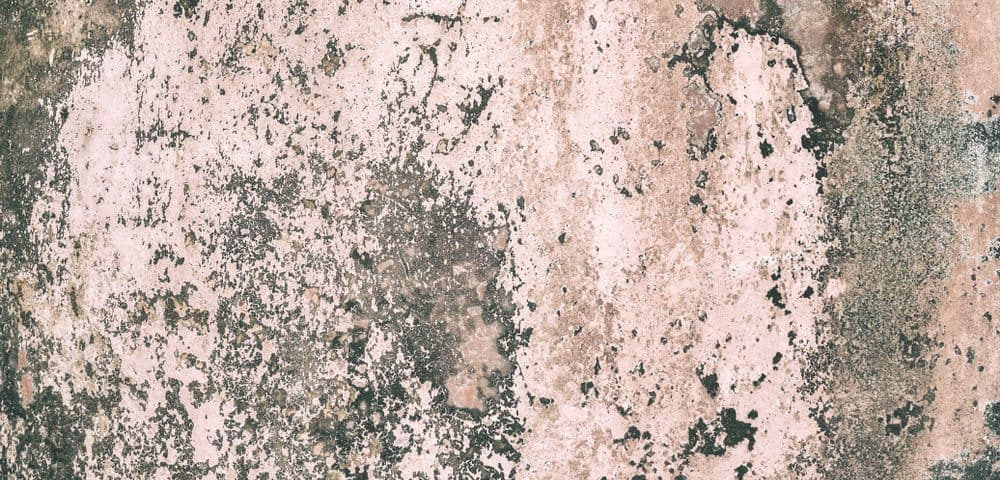 What Is Mold Remediation Ecs Carpet Cleaners