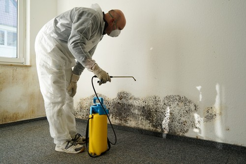 Mold remediation with a contractor