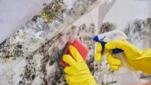 mold abatement service