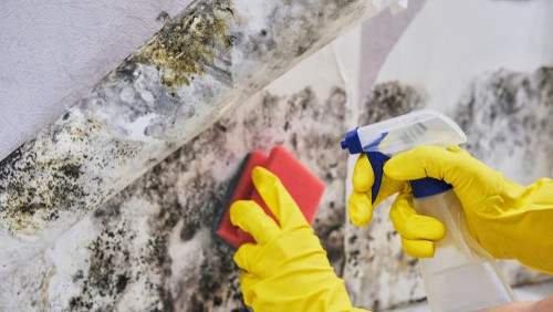 mold abatement service